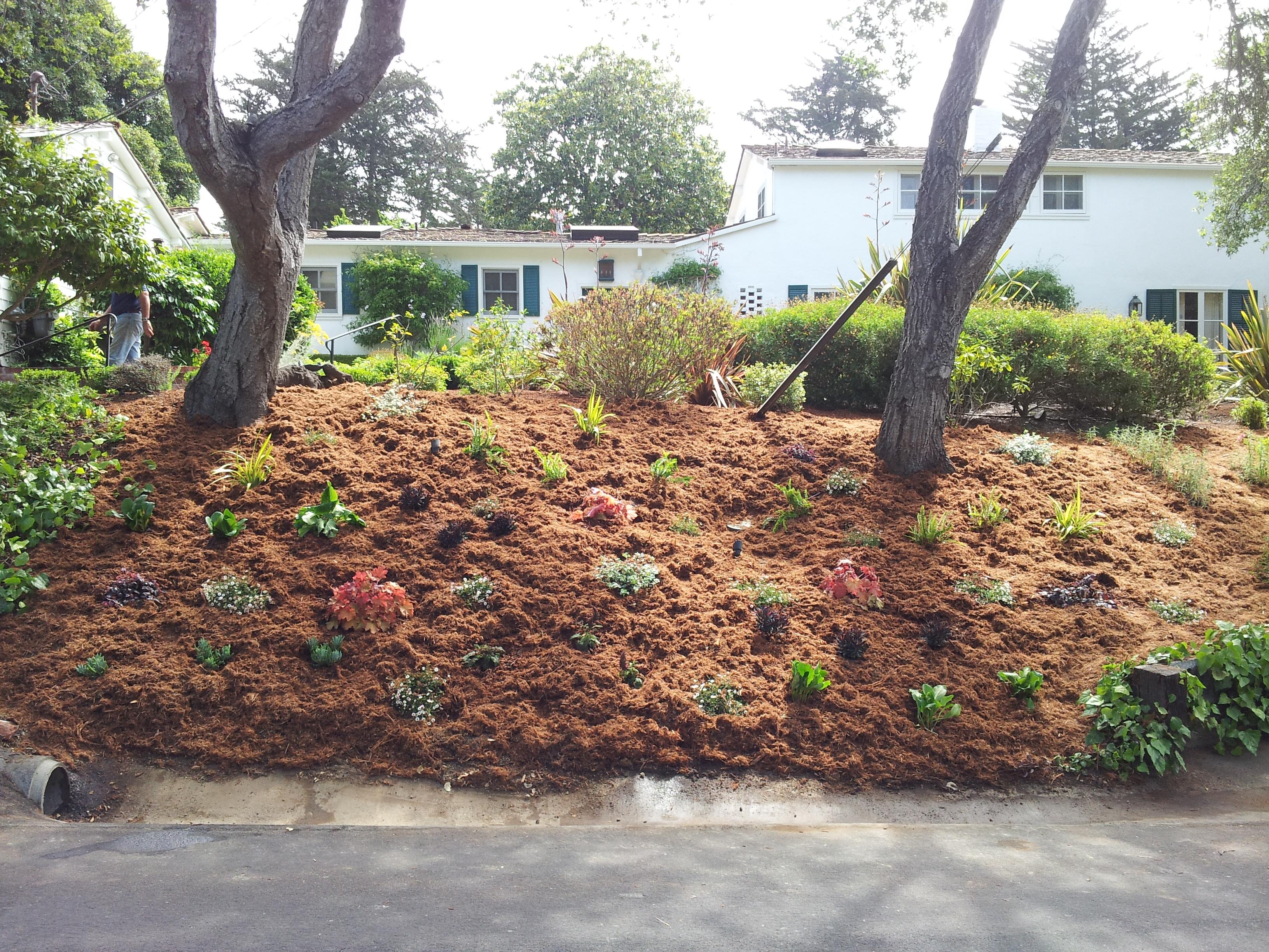 Bernie\'s front yard (Santa Cruz, CA)   Cathleen\'s Garden Creations